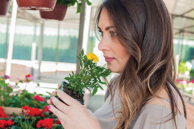 Mayorista de plantas para viveros rograplant for Viveros plantas en temuco