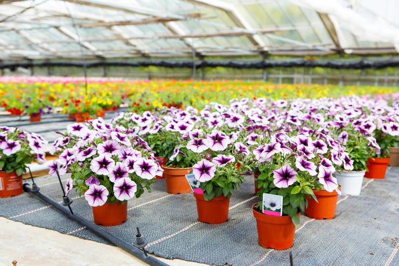 Plantas al por mayor para viveros rograplant for Imagenes de viveros de plantas ornamentales