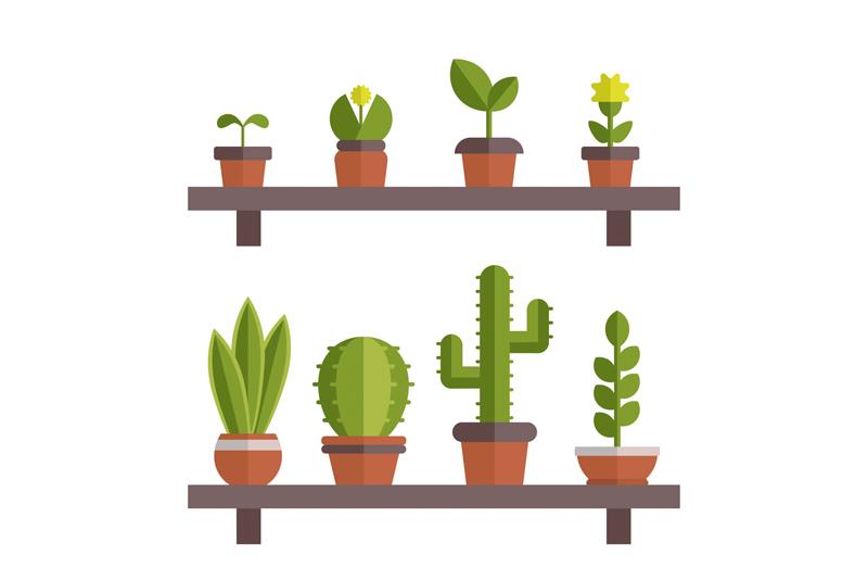 5 plantas de interior muy resistentes