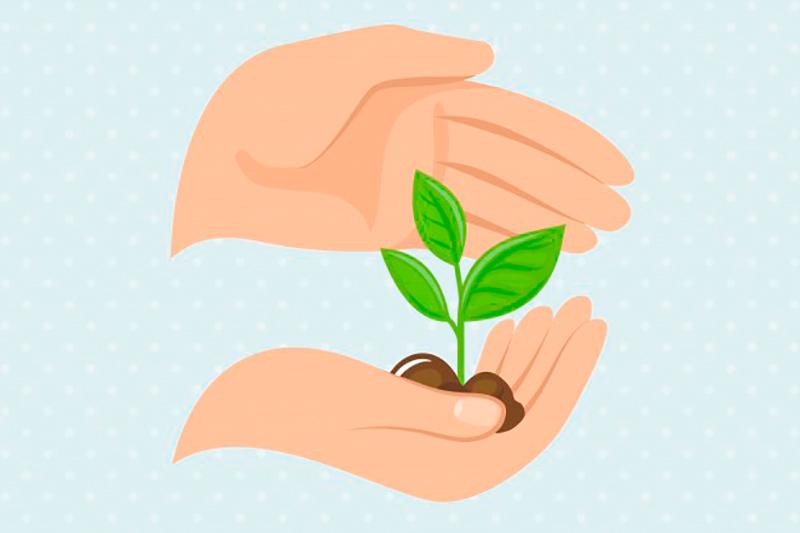 cuidado-plantas-