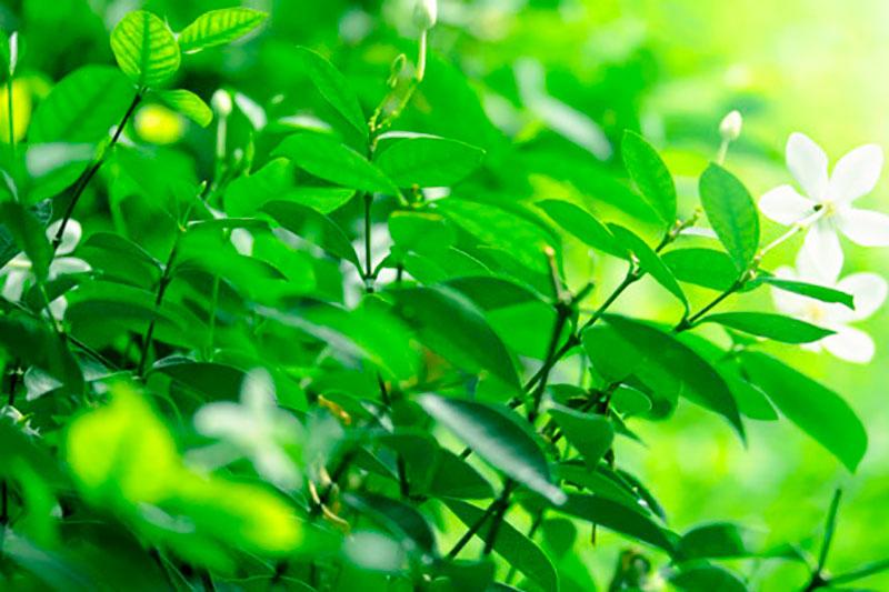 plantas-felicidad-