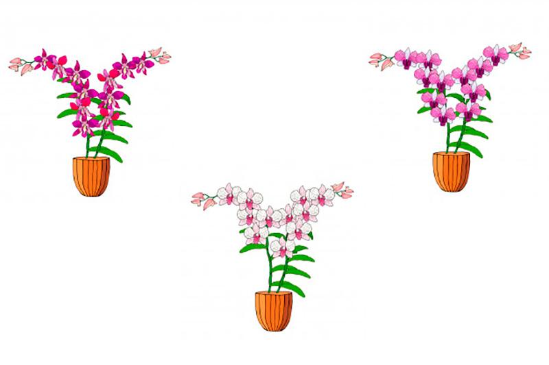 venta-orquideas-