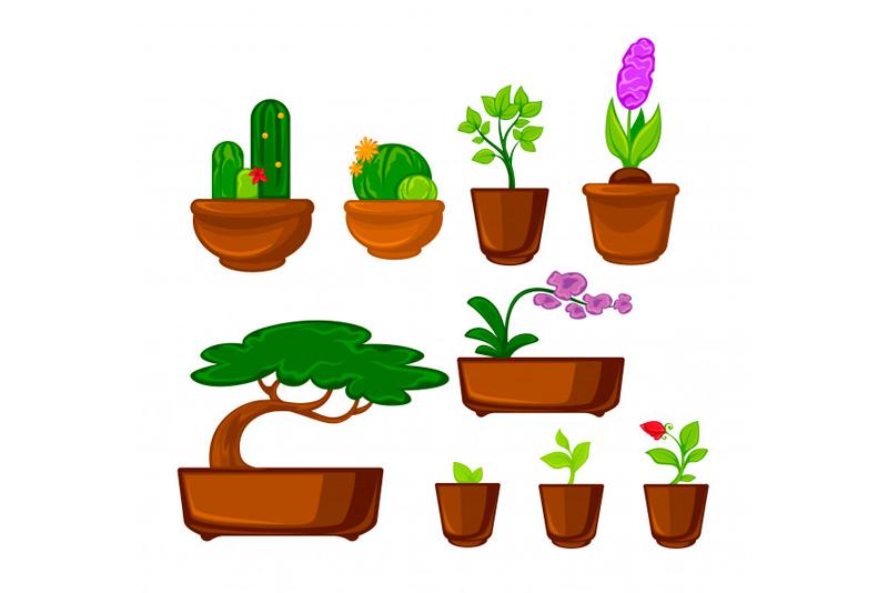 10 consejos para cuidar tus plantas