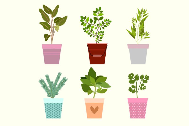 Plantas al por mayor en Alicante