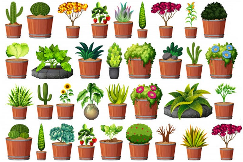 Plantas al por mayor en Cádiz