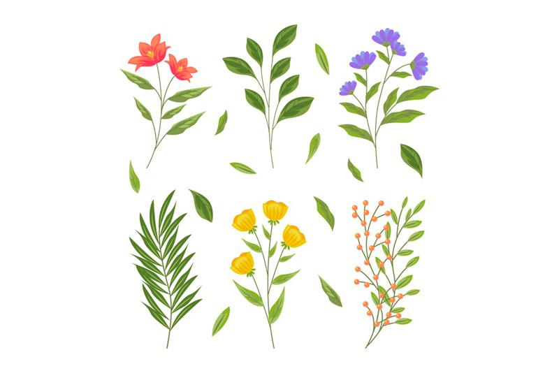 Plantas para floristerías en Valencia