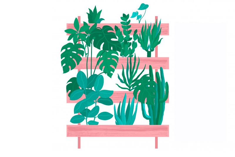 Cómo cuidar las Zamioculcas zamiifolia