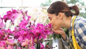 comprar orquídeas al por mayor