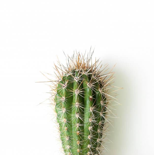 comprar cactus al por mayor